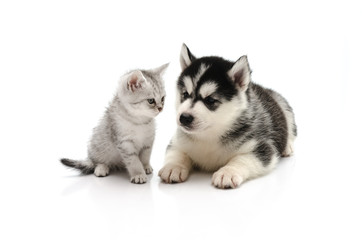 Cute Kitten and puppy on white background