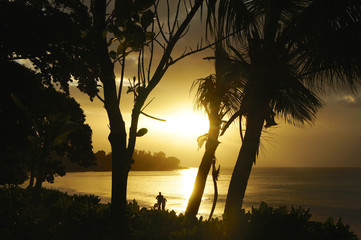 Backlit Silhouette by trees on the beach in the Seychelles in la