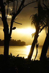 Backlit Silhouette by trees on the beach in the Seychelles