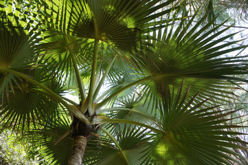 Canopy of green palm tree in the tropics