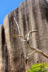 Granite rock with dead branch