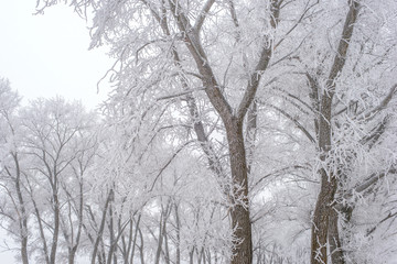 Winter landscape, frozen trees
