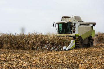 Corn harvest with combain