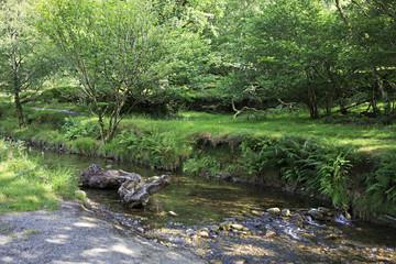 Vegetation on the banks of creek.