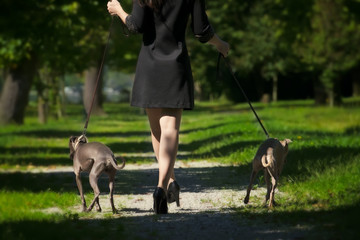 Woman legs and  two greyhounds in the park
