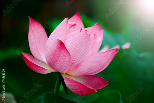Aluminium Lotusbloem Lotus flower