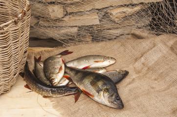 Выловленная рыба
