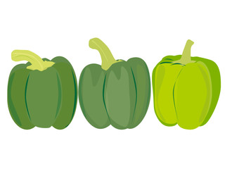 Green sweet pepper vector