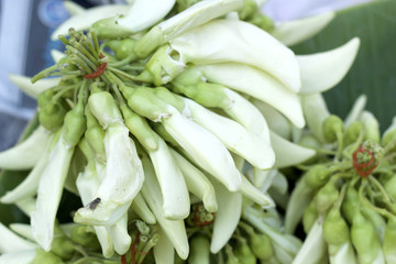 Agasta fresh white at the market