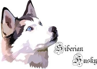 Siberian Huksy