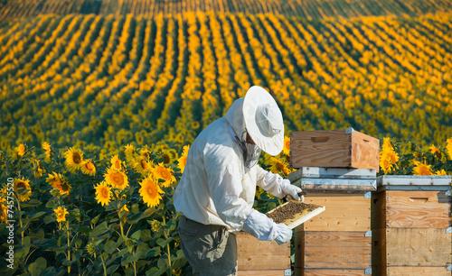 Foto op Plexiglas Bee Beekeeper working