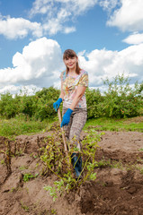 Young woman harvesting potato on the field in sunny day