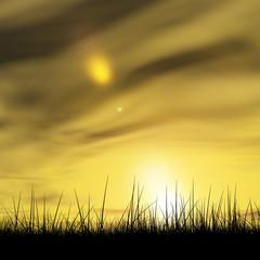 Black grass over sky sunset background