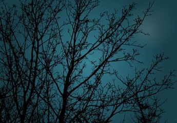 night landscape with branches, vector illustration