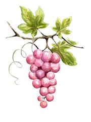 Illustration -- vine