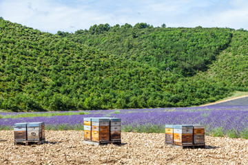 Beehive close to lavander field