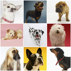 Collage of various pet dogs