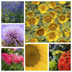 Collage of various beautiful flowers