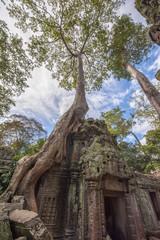 Angkor Ta Prohm in Cambodia