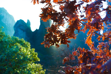 Beautiful close up view of leaves Meteora, Greece