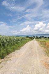 サトウキビ畑 沖縄