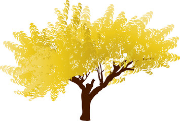 golden autumn tree on white
