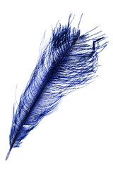 dark blue feather on white