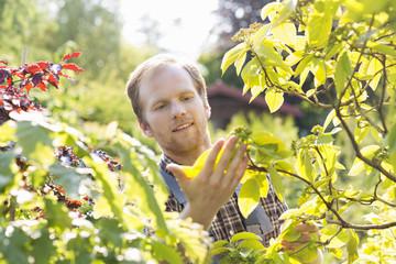 Gardener examining leaves on branch at garden