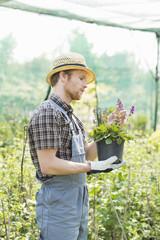 Gardener examining flower pot at greenhouse