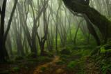 Bosque de Nepal