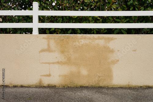 Papiers peints Mur Baumangel Gartenmauer mit Wasserinfiltration