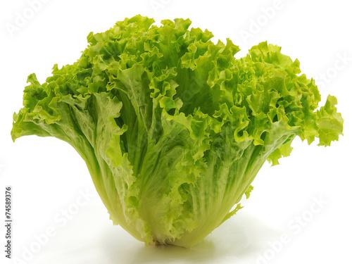 Plexiglas Salade Bataviasalat