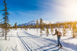 Cross-country skiing in Scandinavian winter landscape at sunset