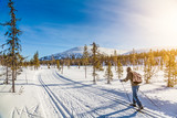 Fototapety Cross-country skiing in Scandinavian winter landscape at sunset