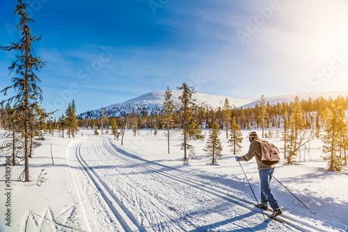 Cross-country skiing in Scandinavian winter landscape at sunset - 74589706