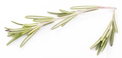 rosemary isolated