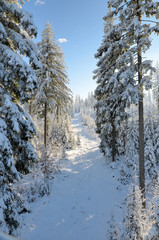 Winter Landschaft Baum Sonne Wald