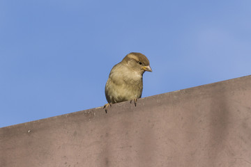 bird on roof