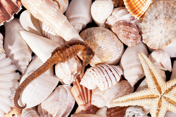 background of  various seashells, starfish and seahorse