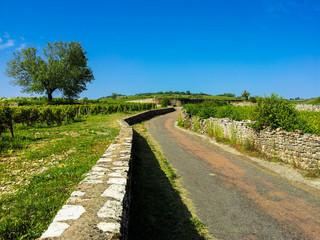 Petite route dans les vignes