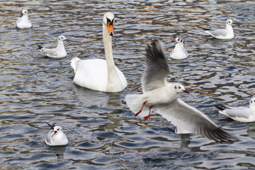 seagull on lake