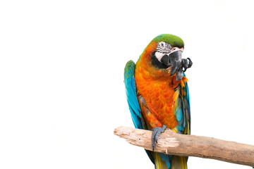 colorful parrot standing on a branch
