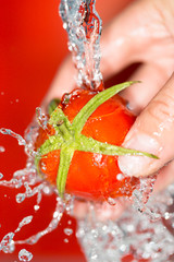 ripe tomatoes in his hand in the water on a red background