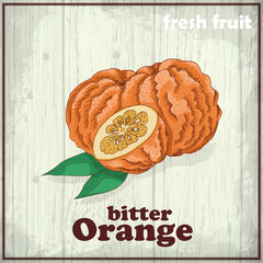 Hand drawing illustration of Bitter Orange