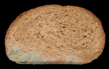 mold on bread on a black background