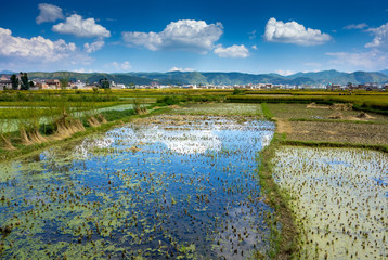 chinesische Landwirtschaft