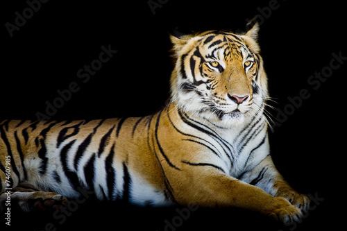 Fotobehang Tijger Grand Tiger