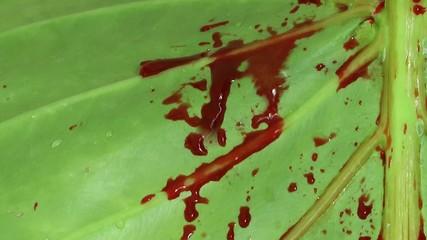Blood on Green Leaf