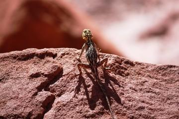 Gecco - Namibia