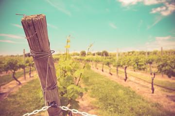 Vintage tone vineyard